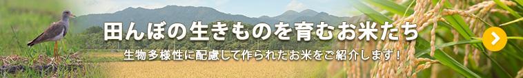 田んぼのいきものを育むお米たち